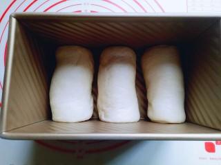 原味吐司,将整形好的吐司胚放入吐司模具中,我的吐司模具是450g的。 放入烤箱进行二次发酵。