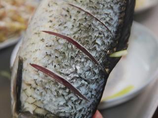 家常炖鲫鱼,在鱼身上,划几刀,这样便于鲫鱼入味