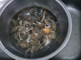 水煮海螺,海螺用水冲洗干净