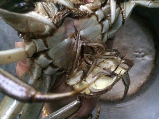 清蒸螃蟹,底部也要掰开刷干净