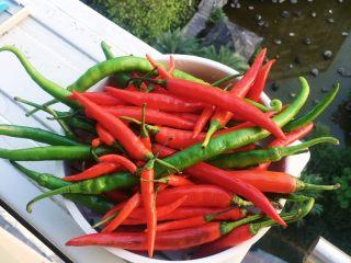 酿辣椒,将清洗干净的辣椒控干水分 (不能有一滴生水 不然不易储存)