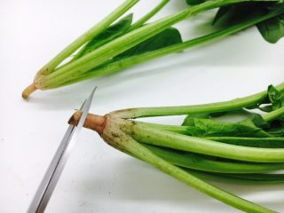 菠菜木耳炒鸡蛋,用剪子剪去根部的头,约1mm。