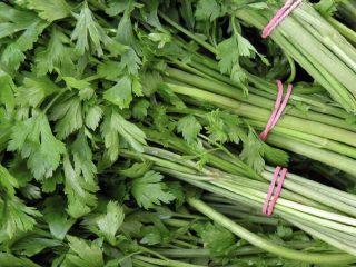 改良版芹菜叶菜圃窝窝头,选择新鲜的芹菜很重要啊,因为这道菜谱需要用到的芹菜叶子。