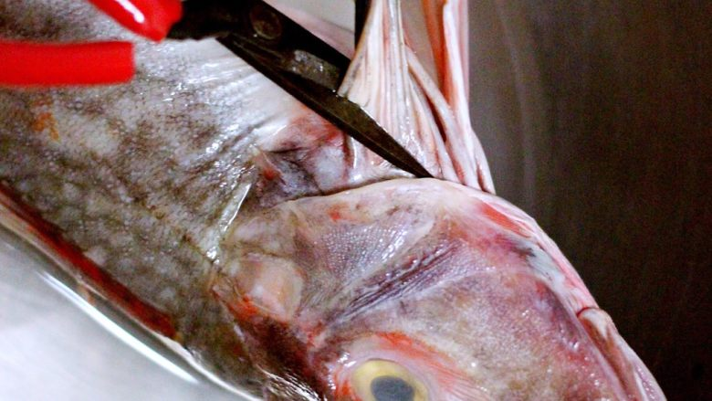 吃掉一朵花+萝卜丝柳叶包&清炖红蟹鱼汤,用剪刀去掉内脏和鱼须
