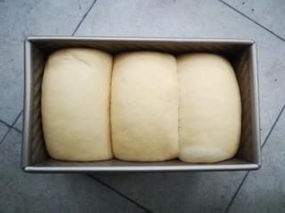 最爱面包+南瓜吐司,放入烤箱,开启发酵档,进行二发,约45分钟发至九分满即可