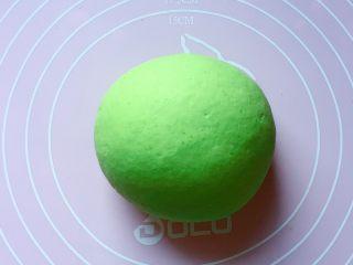 最爱包子+彩球包子,和绿色面团:将100克面粉和1克酵母粉拌匀,加入菠菜汁(菠菜洗净过开水后切断放料理机里榨成汁),和成软硬适中的面团,盖上保鲜膜放温暖处发酵至2倍大。