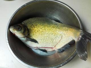 糖醋胡萝卜鳊鱼,鳊鱼刮去鱼鳞,去掉鱼鳃