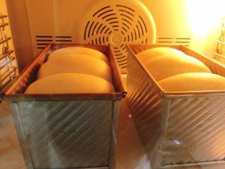 中种奶油奶酪吐司,入预热烤箱中下层180度40-45分钟,烤一个的话缩短十分钟左右,火力时间根据自己烤箱调节。