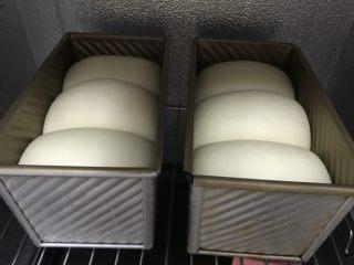 中种奶油奶酪吐司,发到差不多满模。