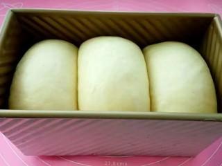 牛奶吐司,再次发酵至土司盒的八分满,盖上土司盒盖