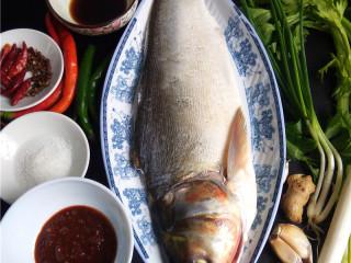 香辣豆瓣鱼,备好食材、调料:白鲢鱼、芹菜、大葱、小葱、老姜、大蒜、二荆条、干辣椒、花椒、香醋、白糖、郫县豆瓣酱;