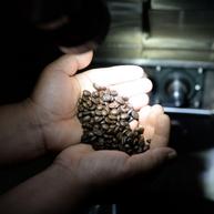 尋覓一杯有溫度的咖啡——咖啡莊園導覽