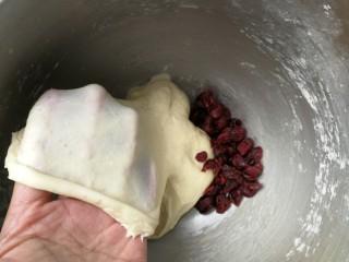蔓越莓酸奶软欧,约6分钟后,面团能拉出结实不易破的薄膜,加入蔓越莓干,再次启动厨师机和面1分钟,把蔓越莓干揉进面团即可