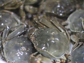 蟹黄炒饭,解锁螃蟹新吃法,水做开,螃蟹上锅大火蒸15分钟。