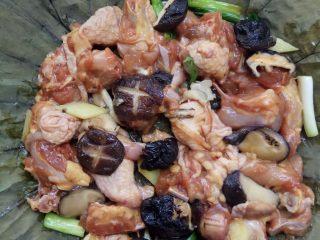 荷叶冬菇蒸滑鸡,7、第七步 将鸡肉和香菇混匀放到已经泡好的荷叶上,包裹起来,腌制10分钟。 荷叶提前5分钟泡软,用之前,用热水烫一下,杀菌。