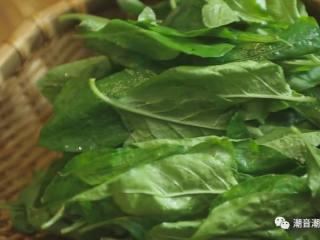 枸杞叶瘦肉汤,❥ 将新鲜的枸杞叶一片一片的摘下来,放在篮中,待用
