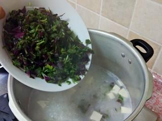 苋菜豆腐咸粥,然后放红苋菜