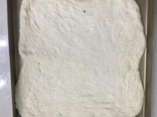 肉松面包卷,11把擀好的面团放入金盘中。