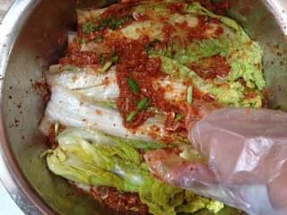 异域小菜-韩式辣白菜, 取一片挤干水分的白菜,用手在正反两面均匀的涂抹上一层酱料,再放一片再涂,如此重复,直至涂完所有的白菜(根部要多一些)