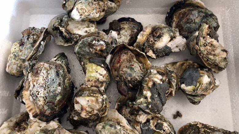 蒜蓉蒸生蚝,5斤带壳生蚝,大约有20个左右。 生长在湛江、广西的叫生蚝,威海、大连等地的是牡蛎。生蚝肉色雪白带黑边。