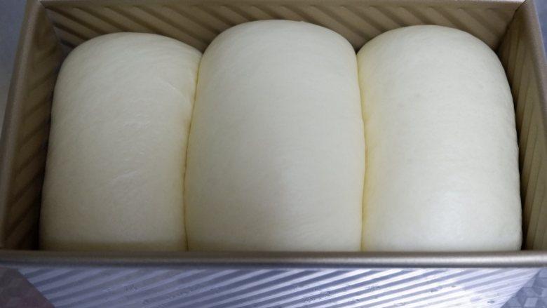波兰种—北海道吐司,将吐司盒放入烤箱中,烤箱底部用盆放热水,营造38℃环境中进行二发,发至吐司盒8分满。