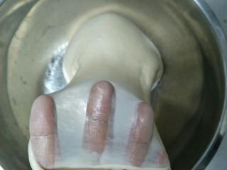 中种法汉堡胚,可以扯出较为结实的透明薄膜