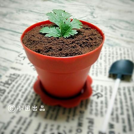 盆栽酸奶能量杯
