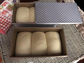 中种白吐司(70%中种),烤箱里放一碗热水,吐司盒放进烤箱,开启发酵功能发酵至模具9分满,加盖吐司八分满即可。