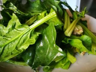 立春美食~炒合菜,菠菜洗净切段
