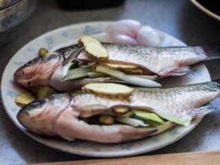 红烧鲫鱼,把大部分葱塞进鱼肚子,生姜摆在鱼身上