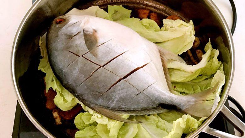 红烧鳊鱼,把金鲳鱼放在白菜叶上