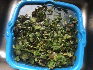 凉拌豆干香菜,把荠菜放在清水里浸泡一会儿清洗干净。控干水分。