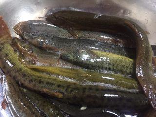 泥鳅炖豆腐,准备新鲜泥鳅,放入一勺盐,盖上盖子免得看起来太残忍了起鸡皮疙瘩,杀泥鳅的方式有好几种,随便你用哪种哈