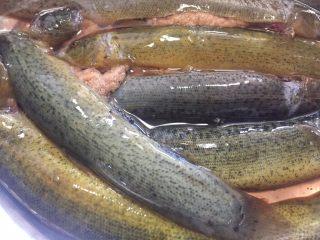 泥鳅炖豆腐,把泥鳅肚子里清洗干净,用开水把表面的粘液清洗干净