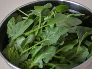 凉拌菠菜,新鲜的菠菜去除根部。