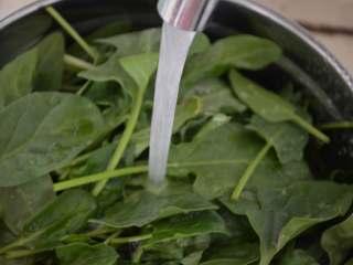 凉拌菠菜,冲洗几遍,洗去沙和杂质。