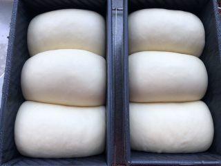 香米粥吐司 ~~附吐司问题汇总,发酵到吐司盒的8.9分满
