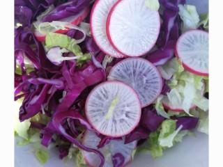 减脂餐系列,生菜和紫甘蓝切成条与水萝卜一起放入盘中