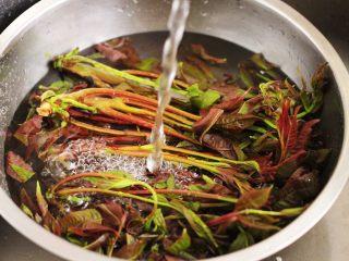 磷虾香椿翠玉饺子🥟【宝宝辅食】,用自来水冲洗香椿