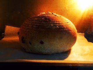 蔓越梅乡村面包,时间36分钟,这是20分钟的状态。