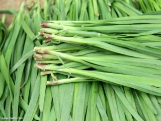 春天第一菜~韭菜肉沫锅贴,准备所需食材韭菜去老叶