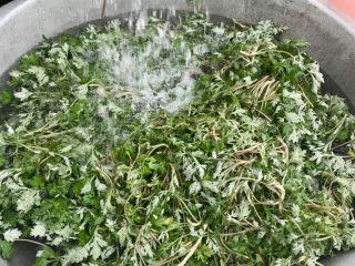 蒿子粑粑,清洗干净,滤水备用