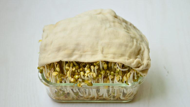 自制绿豆芽,因为要避光,稍微见光豆芽就会发红,所以中途没有拿出来拍照。这是第7天的样子,纱布被顶的老高了,已经可以吃了,就拿出来拍照了