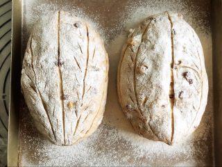 全麦核桃咖啡软欧包(液种发酵法),发酵好的面团撒粉,割包