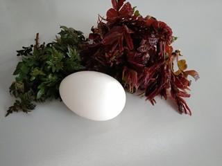 香椿+鹅蛋,准备好食材,花椒芽,香椿洗干净