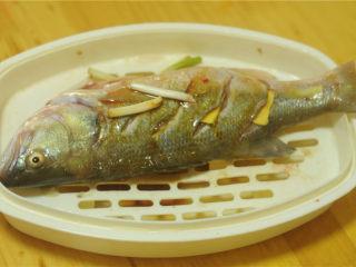 葱香鲈鱼,腌制好的鱼移入微波炉蒸盘里