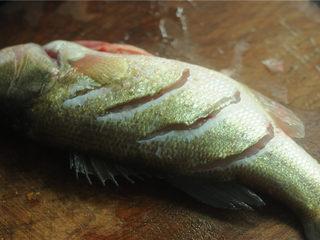 葱香鲈鱼,清洗干净后,用刀在表面割几刀