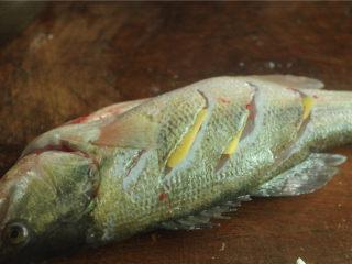 葱香鲈鱼,将姜片塞入刀缝里