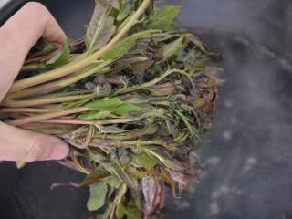 香椿拌豆腐,香椿放入开水中烫一下,去除香椿的致癌物质。