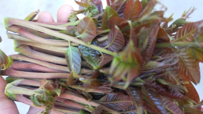 春天特色\炸香椿鱼,摘一把香椿芽就够了。